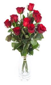 Růže rudé vázané 9ks - délka 40 - 50 cm