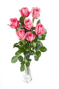 Růže růžové vázané 9 ks - délka 40 - 50 cm
