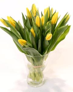 Tulipány žluté vázané 15ks