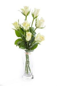 Růže bílé vázané 9ks - délka 40-50 cm