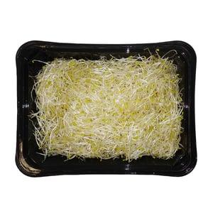 Alfalfa klíčky, vanička