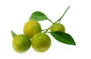 Kumquat zelený (Kumquat green), balení