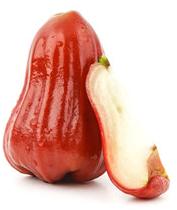 Hřebíčkovec (Rose apple), volný 1ks
