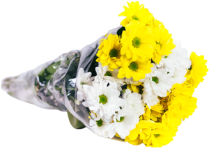 Chryzantéma mix barev